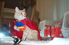super kitten | by Malingering