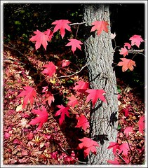 Boje jeseni 2