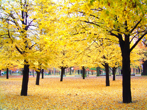 Yellow in the fall | by six steps 