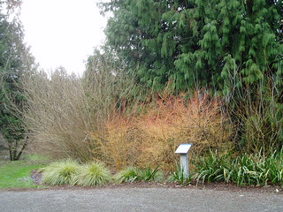 Winter Garden Bed with Cornus | by RHR Horticulture