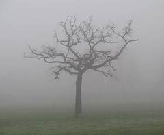 Tree in the fog | by racheletodd