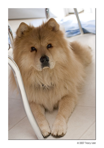 200701dogs_32