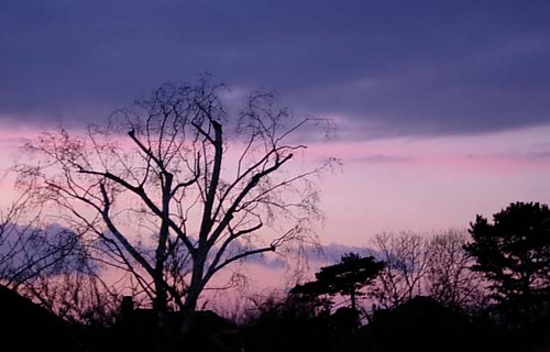 Silhouettes in the pink sky | by DeepBluC