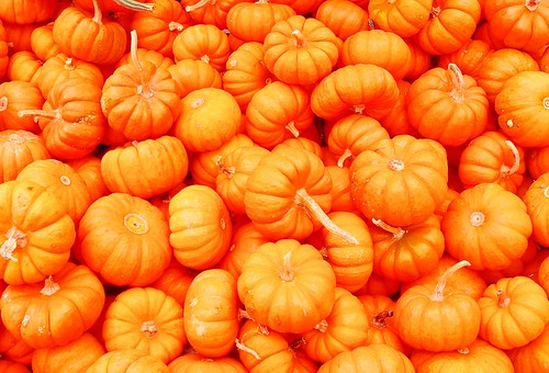 mini pumpkins | by shelley_ginger