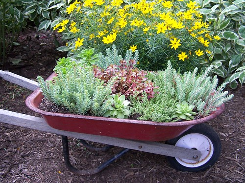 sedum i got this kid sized wheelbarrow for at a gara flickr. Black Bedroom Furniture Sets. Home Design Ideas