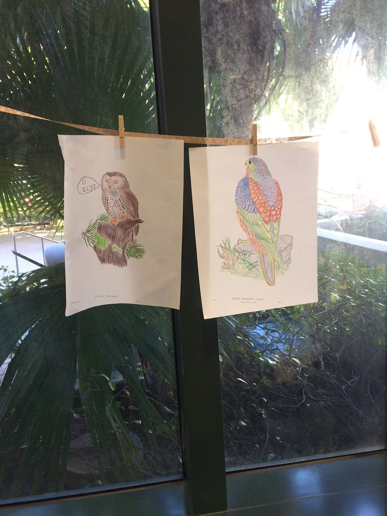 completed coloring pages of birds