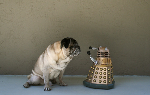 Pug Poses With Dalek | by zoomar