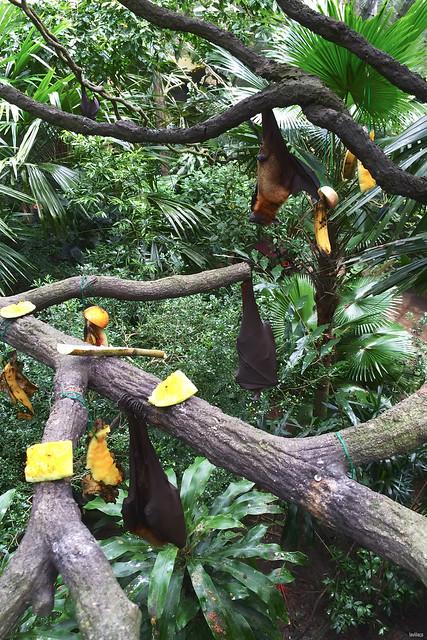 lavlilacs Singapore Zoo bats