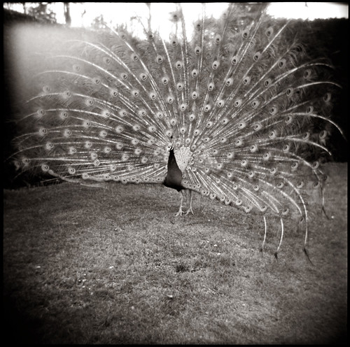Holga#101 | by thorburn