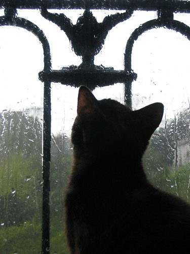Cat and rain | by Ol.G
