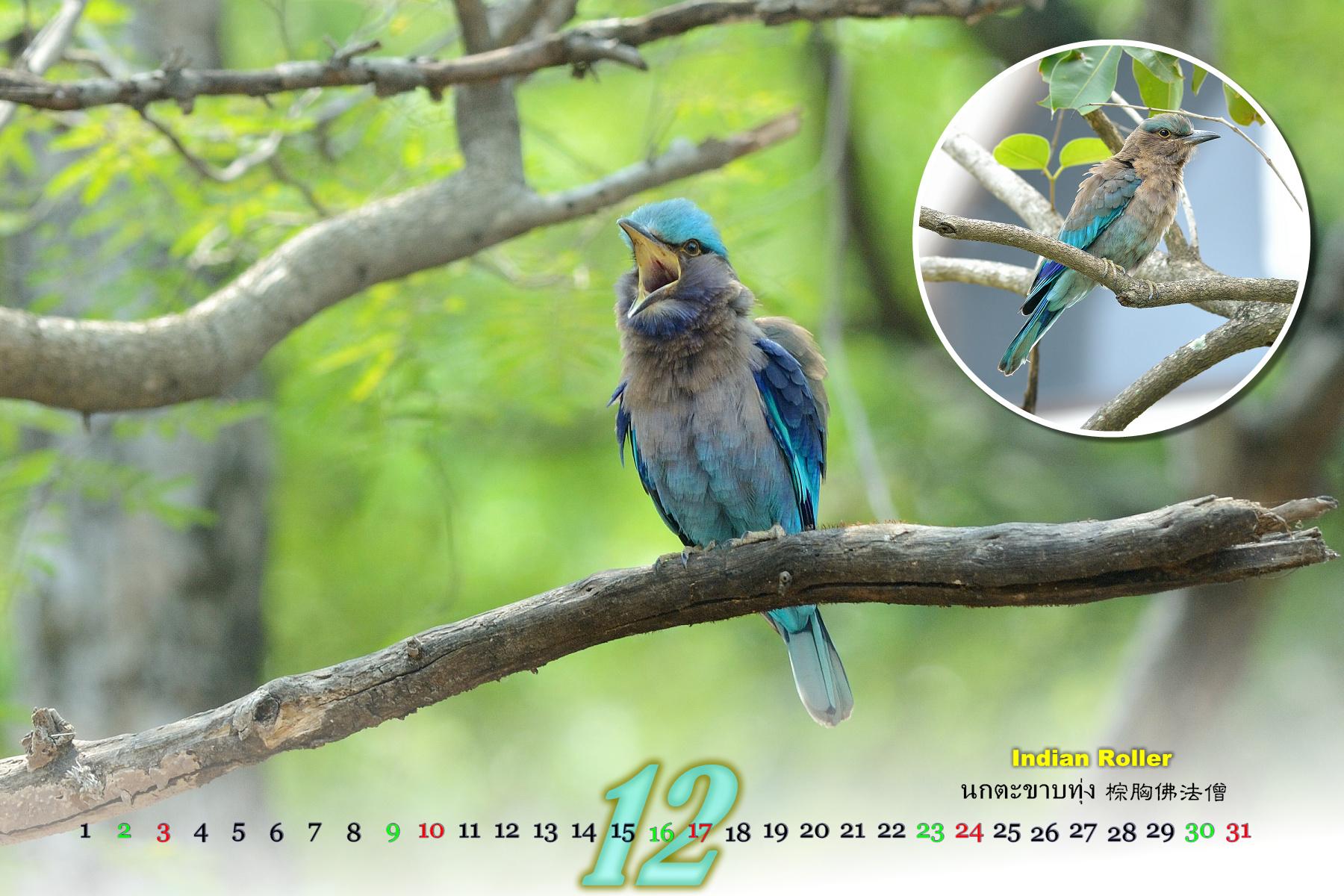 Thai Bird Calendar 2017_12