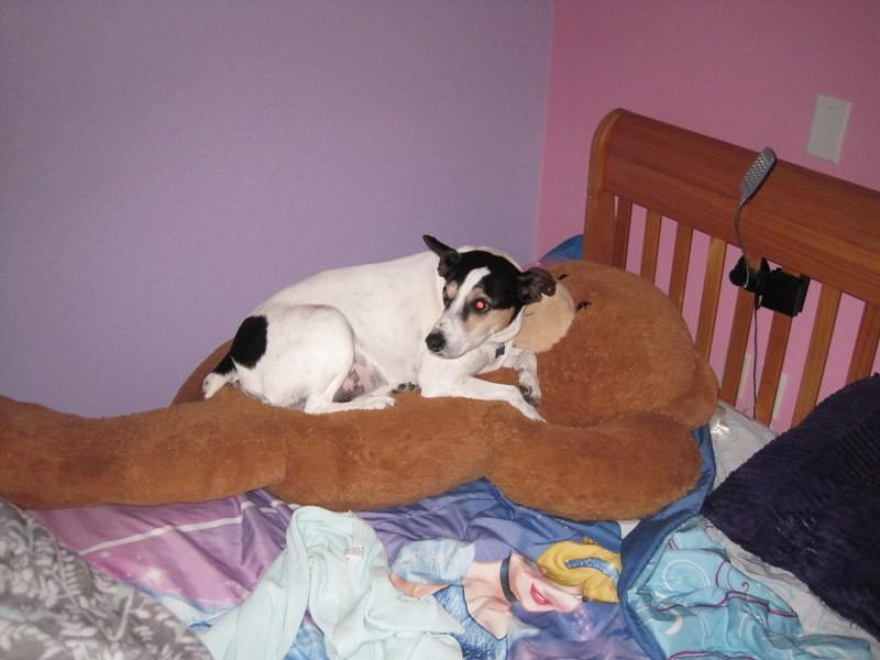 dog flop house (3)