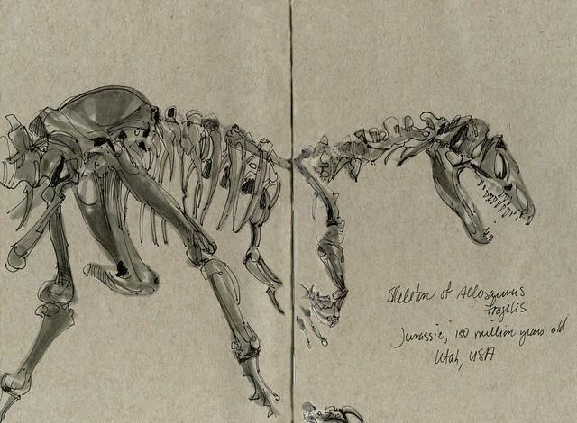 Vienna Naturhistorisches Museum, allosaurus sketch