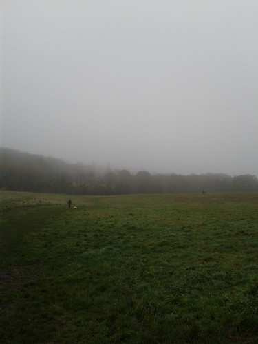 Foggy Hampstead Heath