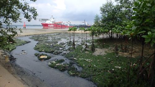 Mangroves at Pasir Ris, Loyang after oil spill in Johor Strait, Jan 2017