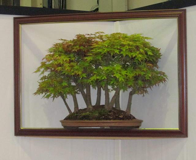 Framed Bonsai Gardening Scotland 2016