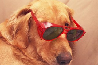 Dog Shades | by skycaptaintwo