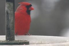 bird IMG_6377