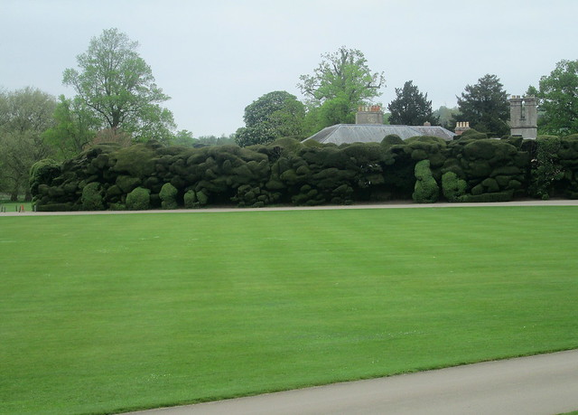 Audley End, Hedge