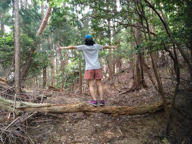 不破の滝 林間歩道 しな