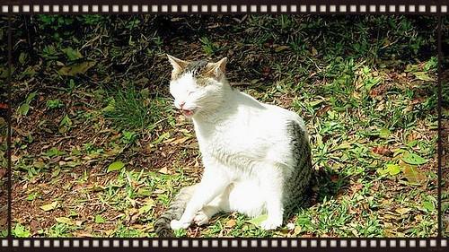 BA cats 4 - Copy