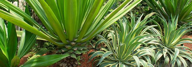 初夏寶島行-綠世界.植物篇