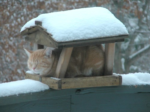 Cool Cat in Bird Feeder | by ATIS547