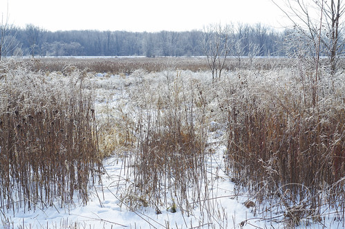 Frozen Marsh