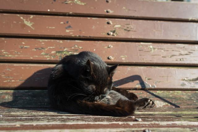 公園のベンチで毛づくろいをする黒ネコの写真