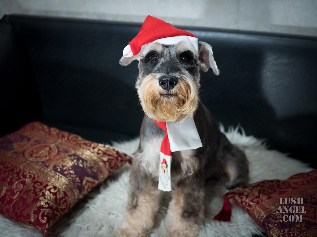 dog-santa-costume