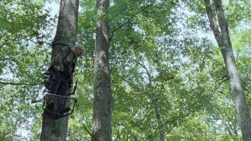 TWD 7_7 TREE ZOMBIE