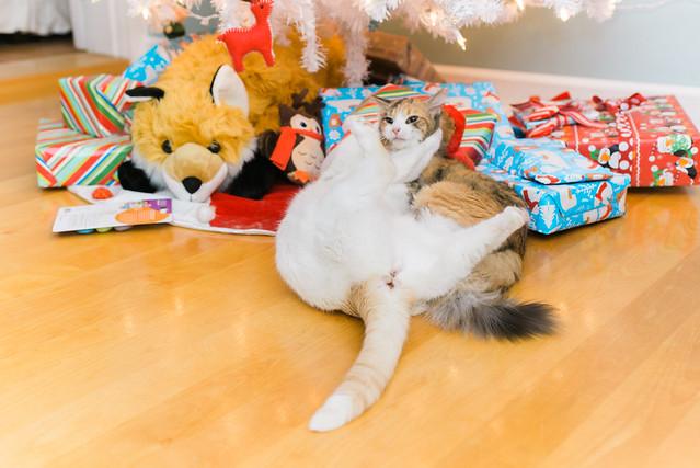 Christmas cat fight!