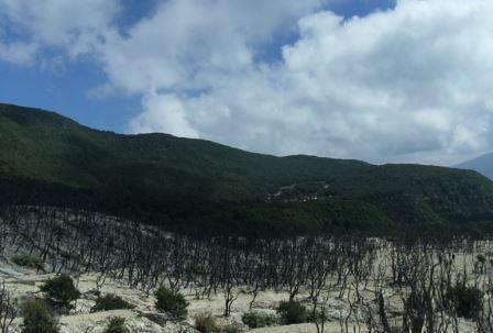 hutan mati2