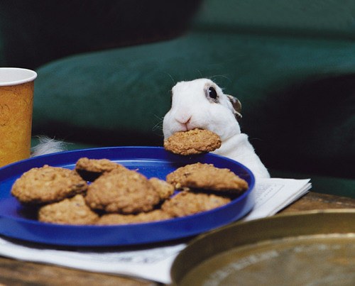 small bunny pilfering a cookie | by Benjamin Breen