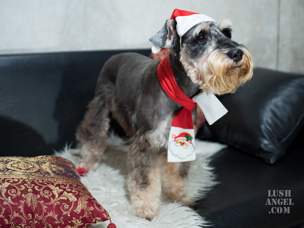 christmas-costume-dog