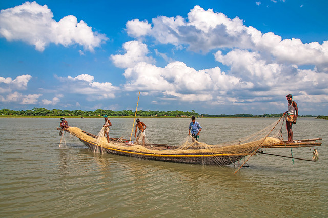 Fishers harvesting fish from a river with a net, Barisal, Bangladesh. Photo by Balaram Mahalder.