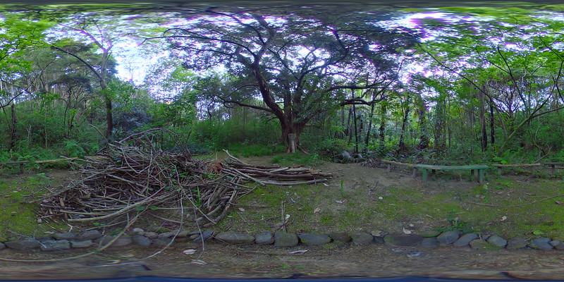 a34 Outdoor Classroom Totara Tree