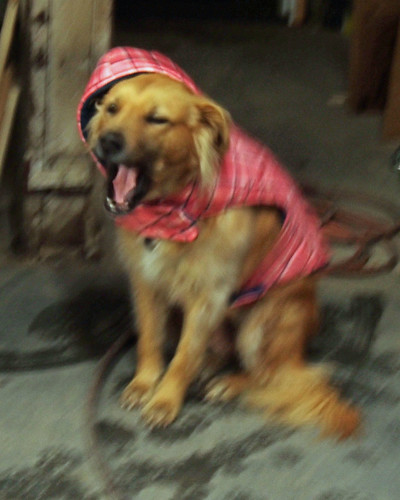 Yawning Leeloo