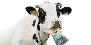 Cow with Polymer banknote