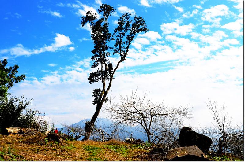 卓武山下農園景觀 2