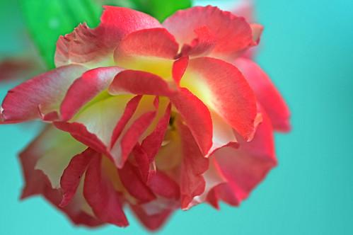 Flower Bud #2