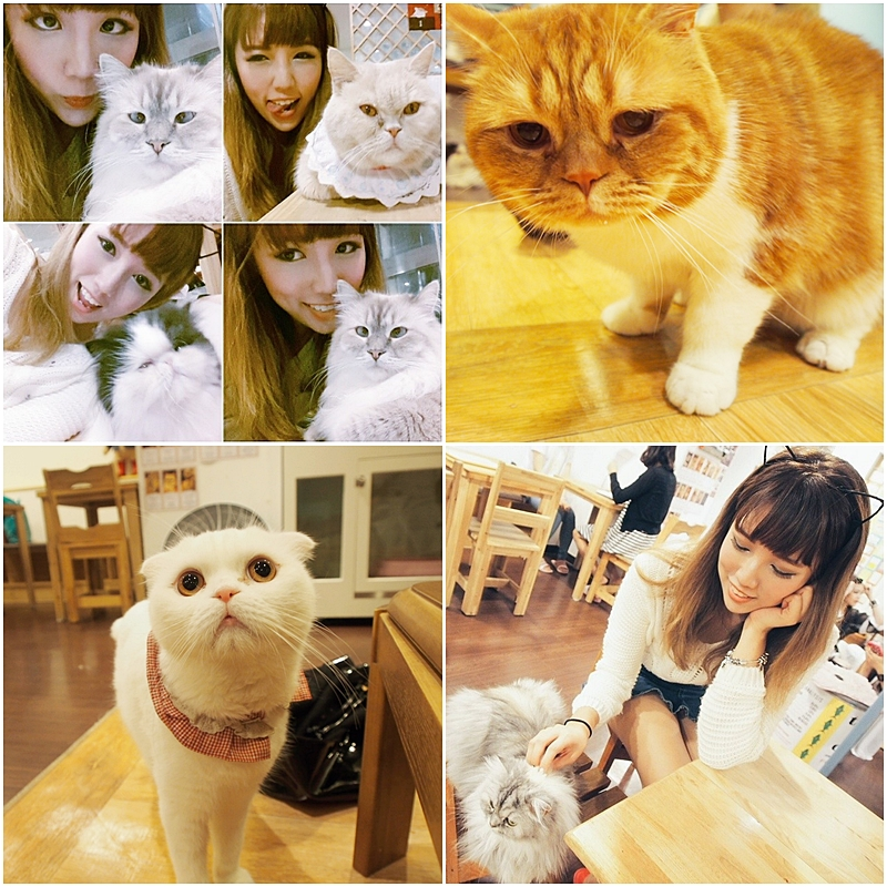 MD Cat Cafe