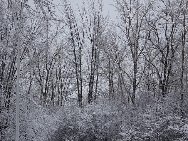 Winter Finery