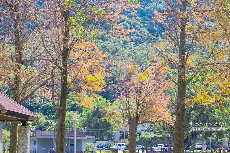 2017.Jan Dahu Park @Taipei, Taiwan大湖公園