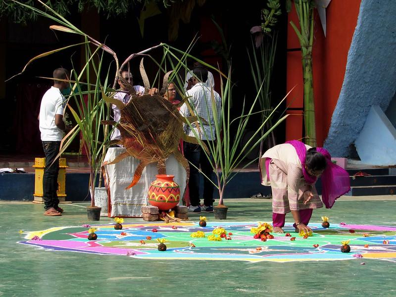 Skolska oslava festivalu Pongal v obrazkoch