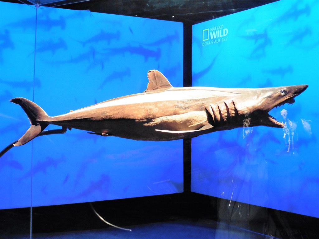 Shark at Animals Inside Out