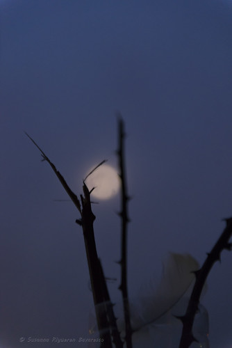 Moon, Thorns & Feather