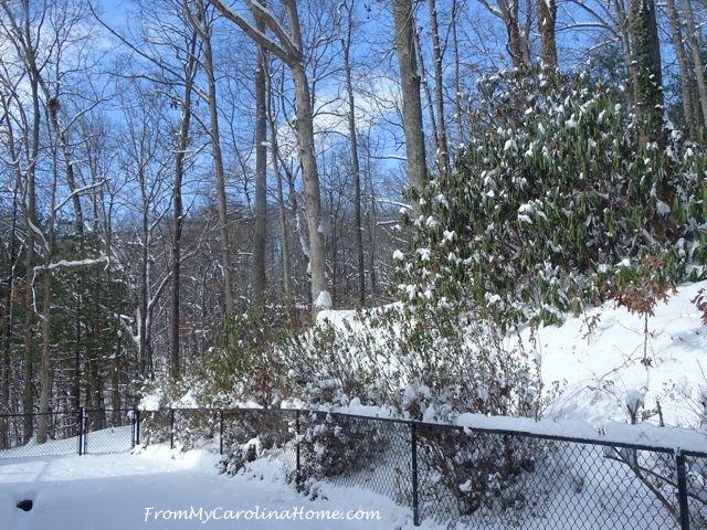 January Snow 2017 17