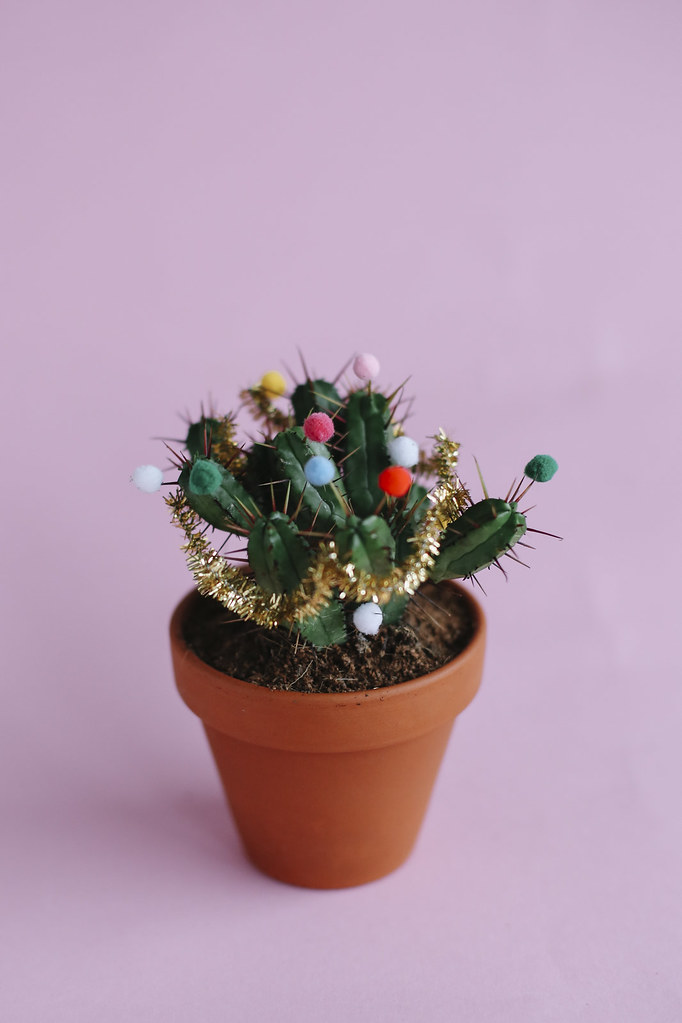 MB1_8838edB, thecurlyhead, amelie n., the curly head, DIY, last minute gift idea, still life photography, christmas-cacti, cacti, Geschenkidee, Weihnachtskaktus, Weihnachtskakteen, blog,