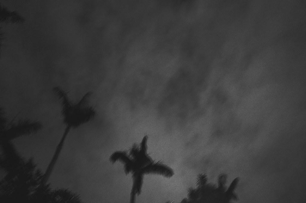心象攝影-樹.夜